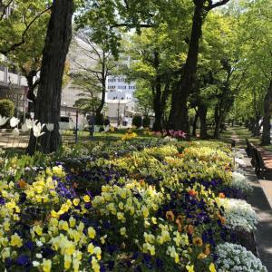 平和大通り沿いの花壇