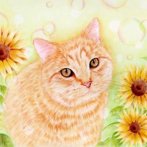 猫ちゃんと向日葵