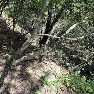 今日も猟に行きましたが早めに撤収からの草刈り。