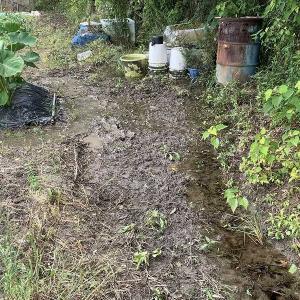 イノシシの進入路をつぶした畑の水路も直します。