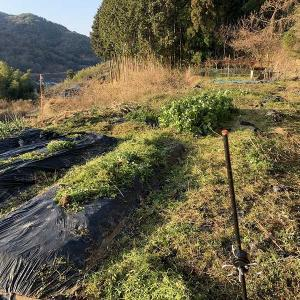 ジャガイモを植えないといけないので・・・