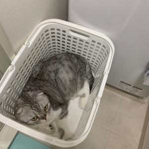 洗濯かごも捨てがたいのね