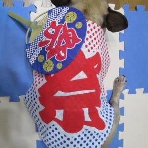 お祭り・ポンデフラワーのおともだち♡♡