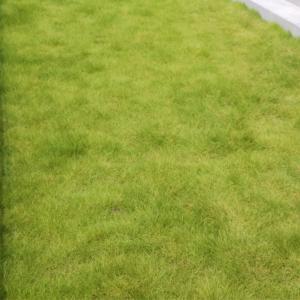 夫のある事が原因で庭の芝が絶滅危機