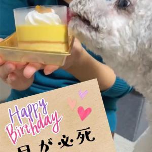 愛犬ぽー、3歳の誕生日おめでとう♡