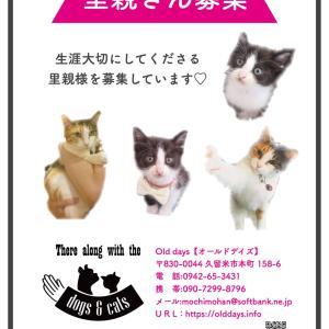 またまた猫ちゃんの里親募集のお知らせ~です