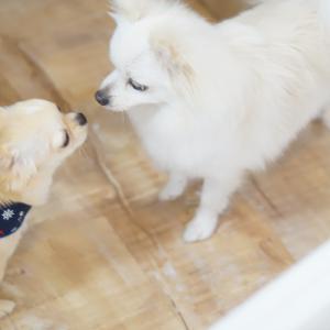 モデル犬アンケート公開