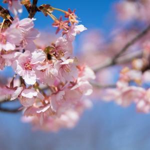 「花菜ガーデン」で感じる春の訪れ