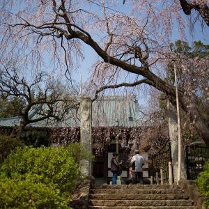 西林寺の桜と、マクロプラナーと