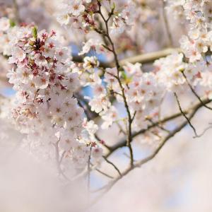 忘れえぬ春