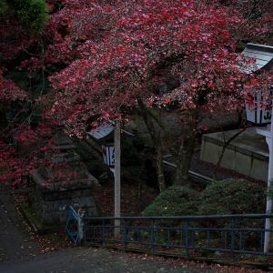 朝、大雄山最乗寺を歩く