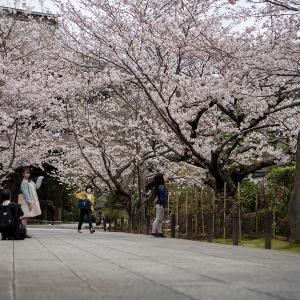 一年ぶりの鎌倉散策