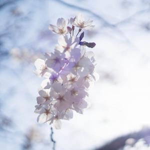 桜2021 #1