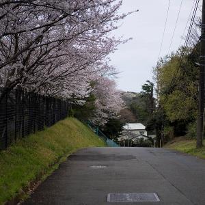 桜2021 #2