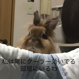 煽るウサギ
