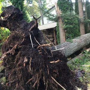 台風19号  停電中
