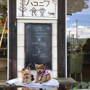 北軽井沢 ハコニハ食堂