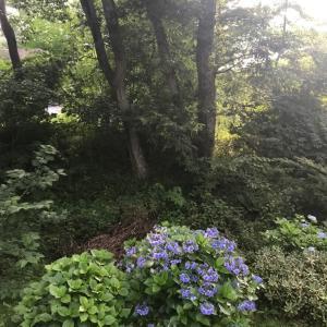 早起きした朝の軽井沢