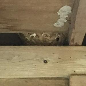 スズメ蜂の巣が