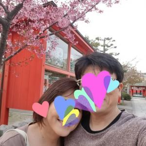 東寺の桜🌸