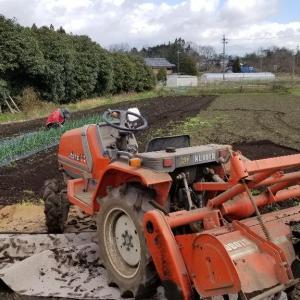 ラブラブ💑農園🥔じゃがいも植えたの巻