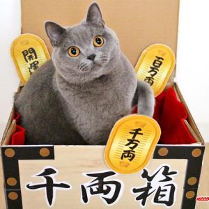 続★我が家の招き猫&仲良く?一緒におやつタイム♪