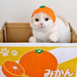 紅まどんな感想&ミカン猫vsモモ猫♪