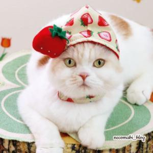 甘酸っぱい春イチゴちゃん&浮かび上がる白い顔!!
