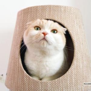 まるで猫ランプ!?爪とぎキャットタワー♪