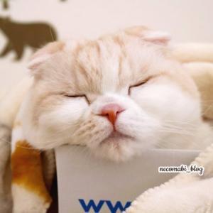暖かさに包まれて♪ブランケットに同化する猫