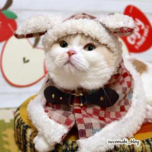 真冬の装い!!手作りロップイヤー風ポンチョでお出かけ気分♪
