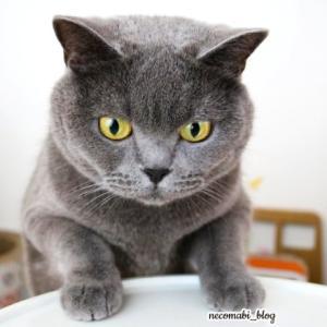 新しいおやつ猫用クッキー♪三ツ星グルメクッキーサンド