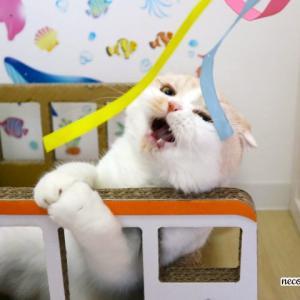 扇風機の風を使って!!ヒラヒラをガジガジ&猫パンチ♪