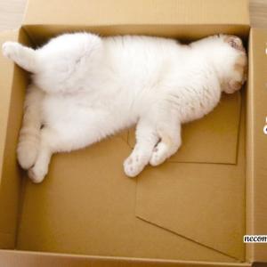 ワイドな箱~真ん中より隅っこが落ち着きます!!~
