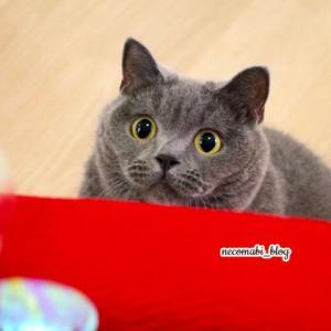 大胆に!!スーパーおっぴろげクールダウンin猫鍋