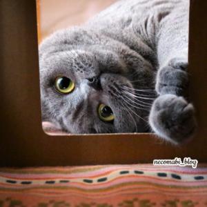 ボクには小さい。。。入りたそうに外から覗き込むコロ助くん!!
