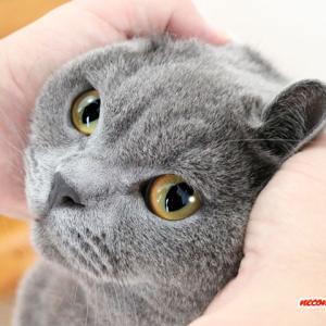お風呂翌日~シャンプー後のモフモフ披露!!~