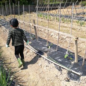 家族の時間 サツマイモ植え