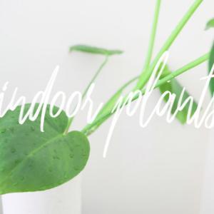 おうちのジャングル化計画 観葉植物のお手入れや実験