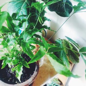 増やせる植物はとことん増やしてみよう&お家ジャングル計画