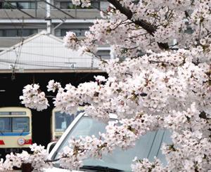 満開の桜&叡電デオ712三陸鉄道色と亀田製菓 通の焼き海老