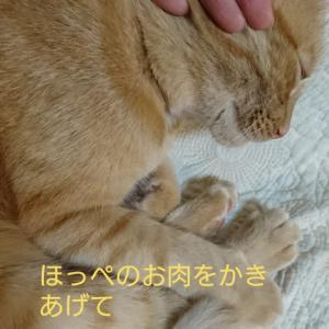 猫にする小顔マッサージ❤️