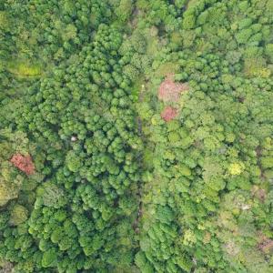 野坂山 美保の滝を空撮