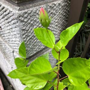 小さな芽に、大きな喜び