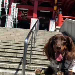 【大須商店街】ワンコと食べ歩きを楽しむ〜名古屋市中区