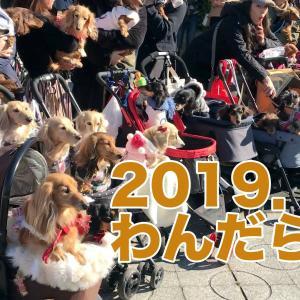 【わんだらけ】ミニチュアダックスのカイ君とワンコのイベントに行く〜2019年12月