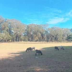 羊に会えるコーンウォールパーク