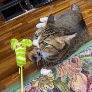 おもちゃ選びは難しい
