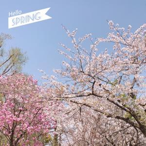 春のおすそわけ♡