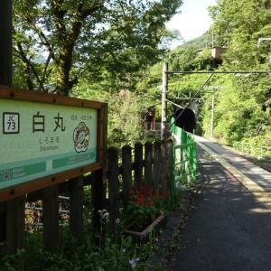 奥多摩 海沢川(2019.8.17)